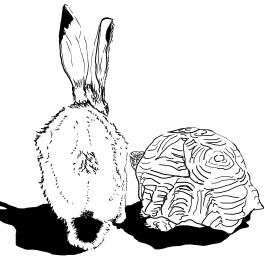 20161002_tortoise-and-hare_cover_v1a