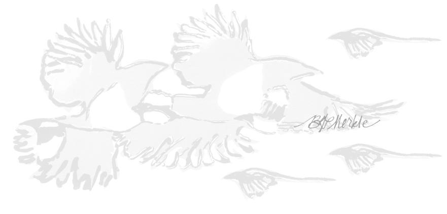 Gray magpies_sig.jpg